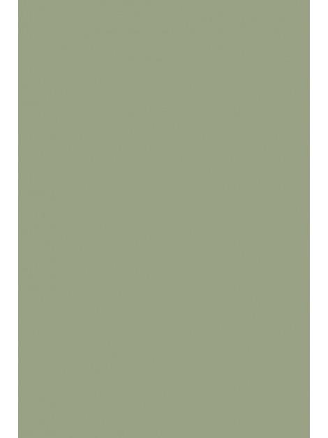 No.19 Lichen